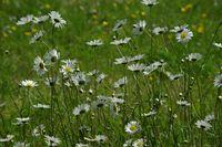 fleurs au vent abbaye maumont