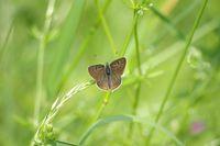 papillon5 abbaye maumont