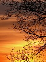 ciel feu feuillage abbaye maumont