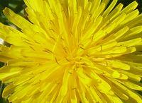 coeur de fleur abbaye maumont