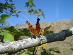 papillon vie abbaye maumont