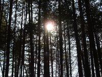 soleil abbaye de maumont